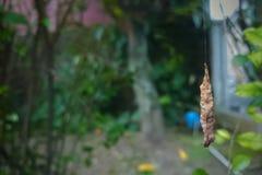 Το ισχυρό Caterpillar Στοκ Φωτογραφίες