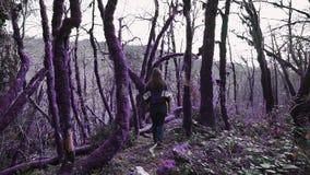 Το ιώδες δασικό κορίτσι παραμυθιού περπατά στην πορεία στο δάσος παραμυθιού και πηδά πέρα από το μειωμένο δέντρο απόθεμα βίντεο