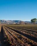 Το κάθετο πιπέρι της Χιλής φυτεύει ακριβώς να βλαστήσει, πόρτα, NM στοκ εικόνες