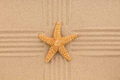 Το κίτρινο αστέρι θάλασσας βρίσκεται στο κέντρο γραμμές άμμου καλοκαίρι θαλασσινών κοχυλιών άμμου πλαισίων έννοιας ανασκόπησης Στοκ Φωτογραφίες