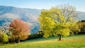 Το κίτρινο δέντρο φύλλων και το κόκκινο δέντρο φύλλων Στοκ Εικόνες