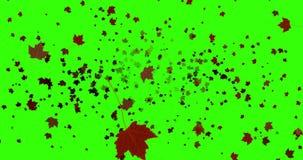 Το κίτρινο, καφετί, κόκκινο ζωηρόχρωμο φθινόπωρο φύλλων χρωματίζει το πέταγμα στο βασικό πράσινο υπόβαθρο οθόνης χρώματος απεικόνιση αποθεμάτων