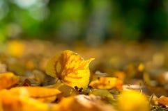 Το κίτρινο πεσμένο φύλλο στο έδαφος Στοκ εικόνες με δικαίωμα ελεύθερης χρήσης