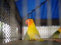 Το κίτρινο πουλί στοκ εικόνα με δικαίωμα ελεύθερης χρήσης