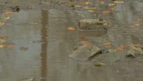 Το κίτρινο φθινόπωρο αφήνει να επιπλεύσει στη λίμνη είναι πέτρα απόθεμα βίντεο