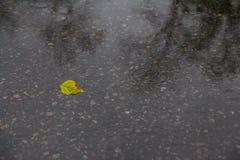 Το κίτρινο φύλλο βρίσκεται σε μια λακκούβα Στοκ Φωτογραφία