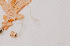 Το κίτρινο φύλλο της βαλανιδιάς και η βελόνα βρίσκονται στο άσπρο ύφασμα στοκ εικόνες με δικαίωμα ελεύθερης χρήσης