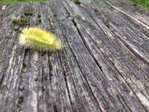 Το κίτρινο Caterpillar στοκ φωτογραφία με δικαίωμα ελεύθερης χρήσης