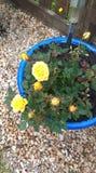 Το κίτρινο patio αυξήθηκε Στοκ εικόνα με δικαίωμα ελεύθερης χρήσης