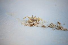 Το καβούρι σκάβει την άμμο μέσα στην παραλία Δημιουργήστε την ασφαλή ιδιοκτησία για τη ζωή Στοκ φωτογραφίες με δικαίωμα ελεύθερης χρήσης