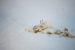 Το καβούρι σκάβει την άμμο μέσα στην παραλία Δημιουργήστε την ασφαλή ιδιοκτησία για τη ζωή Στοκ εικόνα με δικαίωμα ελεύθερης χρήσης