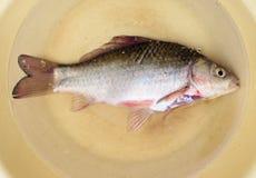 Το καθαρισμένο ψάρι είναι σε ένα πιάτο Στοκ φωτογραφία με δικαίωμα ελεύθερης χρήσης