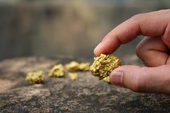 Το καθαρό χρυσό μετάλλευμα που βρίσκεται στο ορυχείο είναι στα χέρια στοκ εικόνα