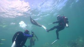 Το καλιφορνέζικο californianus Zalophus λιονταριών θάλασσας παίζει με με τους δύτες φιλμ μικρού μήκους