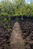 Το καλλιεργήσιμο έδαφος και τα οπωρωφόρα δέντρα καλλιεργούν την άνοιξη μπλε σύννεφων πλήρες πράσινο τοπίο εστίασης πεδίων ημέρας  Στοκ φωτογραφία με δικαίωμα ελεύθερης χρήσης