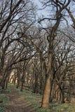 Το καλό πάρκο γήινου κράτους είναι ένα αστικό κρατικό πάρκο στην άκρη των σιού πτώσεων, περιοχή μετρό της νότιας Ντακότας Στοκ Φωτογραφία