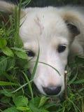 Το καλύτερο σκυλάκι 123 φωτογραφία Στοκ Φωτογραφία