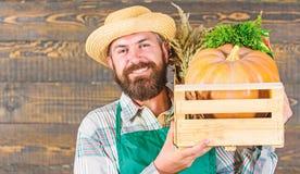 : Το καπέλο αχύρου της Farmer παραδίδει τα φρέσκα λαχανικά r Άτομο εύθυμο στοκ φωτογραφίες με δικαίωμα ελεύθερης χρήσης