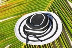 το καπέλο βγάζει φύλλα τη & Στοκ Εικόνες