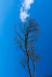 Το καπνίζοντας δέντρο Στοκ εικόνα με δικαίωμα ελεύθερης χρήσης