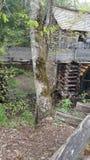 Το καπνώές περιστέρι του ανατολικού Τένεσι Sevierville βουνών όρμων Cades σφυρηλατεί την πρωτόγονη σκηνή φύσης Gatlinburg Στοκ Εικόνα