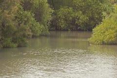 Το καταπληκτικό πάρκο ρευμάτων, Ισραήλ Στοκ εικόνες με δικαίωμα ελεύθερης χρήσης