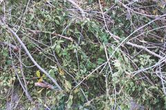 Το καταρριφθε'ν δέντρο διακλαδίζεται, καταρρίπτοντας, καταρριφθε'ντες κλάδοι δέντρων στον τομέα, αποδάσωση στοκ εικόνες