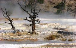 το καυτό μαμμούθ εθνικό πάρκο αναπηδά την πέτρα κίτρινη Στοκ φωτογραφίες με δικαίωμα ελεύθερης χρήσης