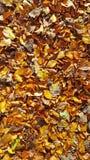 Το καφετί και χρυσό φθινόπωρο βγάζει φύλλα στο δασικό πάτωμα στοκ φωτογραφία με δικαίωμα ελεύθερης χρήσης