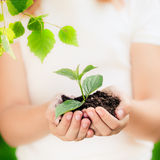 το καφετί καλυμμένο γήινο περιβαλλοντικό φύλλωμα ημέρας πηγαίνει πηγαίνοντας πράσινο δέντρο κειμένων συνθημάτων ρητών φράσεων φύσ Στοκ Εικόνα