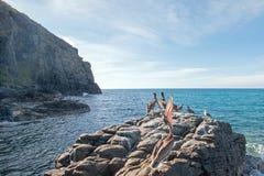Το καφετί κεφάλι πελεκάνων Καλιφόρνιας ρίχνει στο βράχο κοντά Todos Santos σε Punta Lobos στη Μπάχα Καλιφόρνια Μεξικό Στοκ φωτογραφία με δικαίωμα ελεύθερης χρήσης