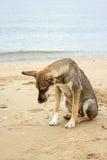 Το καφετί σκυλί κάθεται στην παραλία Στοκ φωτογραφία με δικαίωμα ελεύθερης χρήσης