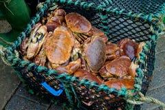 Το καλάθι των φρέσκων καβουριών φθάνει ακριβώς στη λιμενική αγορά Στοκ Φωτογραφίες