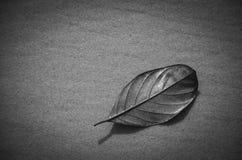 το καλαμπόκι σπαδίκων ανασκόπησης φωτογράφισε το λευκό Στοκ εικόνες με δικαίωμα ελεύθερης χρήσης