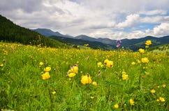 Το καλοκαίρι είναι στα βουνά Στοκ φωτογραφία με δικαίωμα ελεύθερης χρήσης