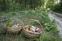 Το καλοκαίρι στο δάσος υπάρχουν δύο πλήρη καλάθια με το edib Στοκ φωτογραφία με δικαίωμα ελεύθερης χρήσης