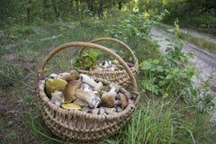 Το καλοκαίρι στο δάσος υπάρχουν δύο πλήρη καλάθια με το edib Στοκ Εικόνα