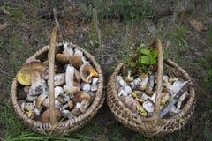 Το καλοκαίρι στο δάσος υπάρχουν δύο πλήρη καλάθια με το edib Στοκ Εικόνες