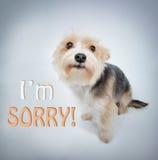 Το καλό σκυλί ικετεύει τη συγχώρηση στοκ εικόνες