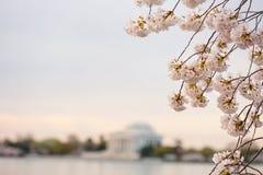 Το κεράσι ανθίζει ανατολή του Washington DC στοκ φωτογραφία