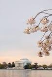 Το κεράσι ανθίζει ανατολή του Washington DC στοκ εικόνες