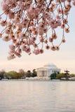 Το κεράσι ανθίζει ανατολή του Washington DC στοκ φωτογραφία με δικαίωμα ελεύθερης χρήσης