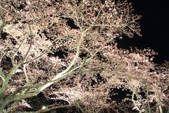 Το κεράσι ανθίζει σε Sakura κανένα sato, Izu, σκηνή νύχτας του Σιζουόκα Στοκ εικόνες με δικαίωμα ελεύθερης χρήσης