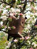 το κεράσι πουλιών ανθίζει το σπίτι Στοκ φωτογραφία με δικαίωμα ελεύθερης χρήσης