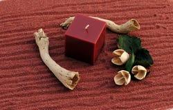 το κερί ανθίζει τα κόκκιν&alpha Στοκ φωτογραφίες με δικαίωμα ελεύθερης χρήσης