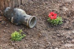 Το κεραμικό δοχείο βρίσκεται στο έδαφος στον κήπο Στοκ φωτογραφία με δικαίωμα ελεύθερης χρήσης