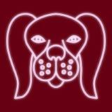 Το κεφάλι ενός σκυλιού Στοκ φωτογραφία με δικαίωμα ελεύθερης χρήσης