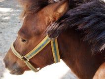 Το κεφάλι ενός καφετιού αλόγου σε μια κινηματογράφηση σε πρώτο πλάνο σχεδιαγράμματος Στοκ φωτογραφία με δικαίωμα ελεύθερης χρήσης