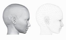 Το κεφάλι ενός κοριτσιού Στοκ Εικόνες