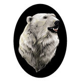 Το κεφάλι της πολικής αρκούδας διανυσματική απεικόνιση